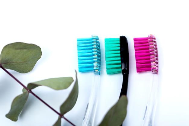 Szczoteczki do zębów na białym stole są ułożone w rzędzie i eukaliptus.