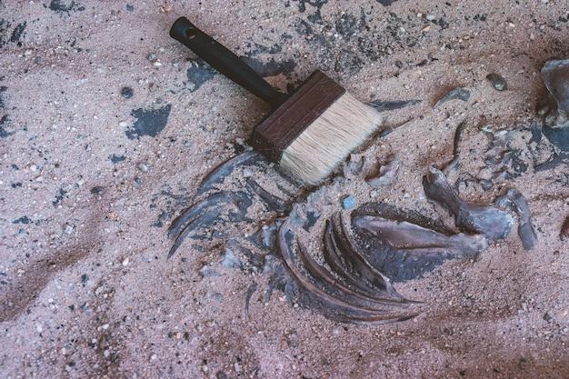 Szczotka na kości w piasku z wykopu archeologicznego