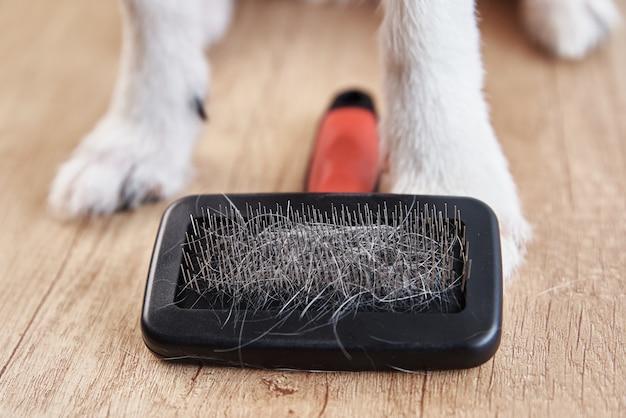 Szczotkowanie zwierząt domowych. łapy psa i grzebień z włosami, zbliżenie