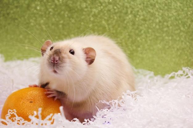 Szczur i mandarynka. szczęśliwego nowego roku. rok szczura 2020