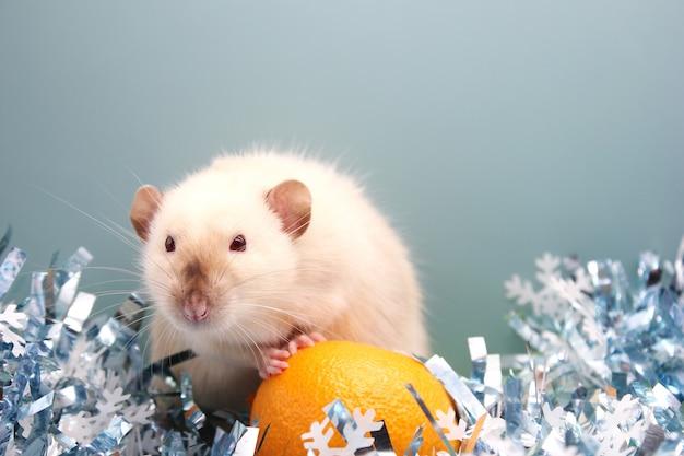 Szczur i mandarynka. szczur jest symbolem nowego roku 2020.