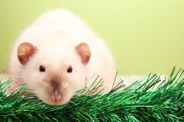 Szczur jest symbolem roku szczura