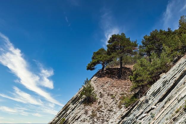 Szczyt klifu z drzewami na tle błękitnego zachmurzonego nieba znajduje się na dzikiej plaży. strome zbocze i sosny.