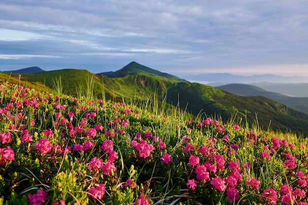 Szczyty klifowe. majestatyczne karpaty. piękny krajobraz. widok zapierający dech w piersiach.
