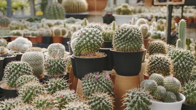 Szeroka gama roślin kwitnących z rodziny kaktusów do dekoracji wnętrz