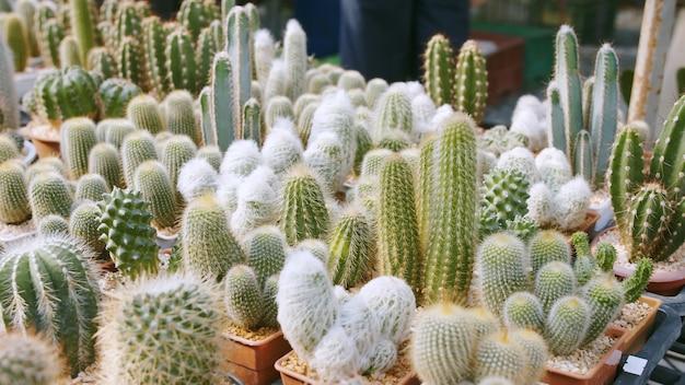 Szeroka gama uroczych i kłujących roślin domowych z rodziny kaktusów