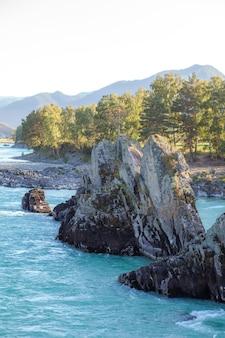 Szeroka i pełnopłynna rzeka górska o szybkim nurcie. z wody wystają duże kamienie. duża górska rzeka katun, turkusowy kolor, w górach ałtaj, republika ałtaju.