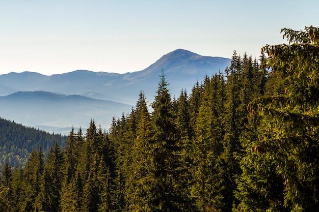 Szeroka panorama zielonych górskich wzgórz przy słonecznej pogodzie. krajobraz karpat w lecie. widok na skaliste szczyty pokryte zielonymi sosnami. piękno przyrody.