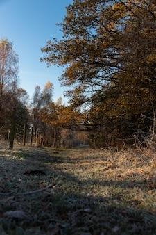 Szeroki kąt strzału lasu pełnego drzew i zieleni pod błękitnym niebem