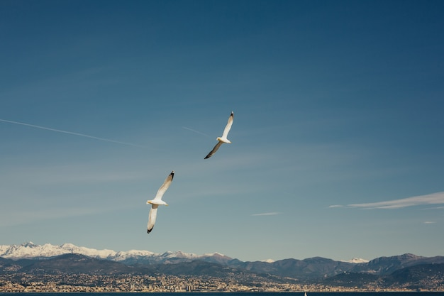 Szeroki widok na panoramę i mewy nad morzem dla koncepcji morskiej
