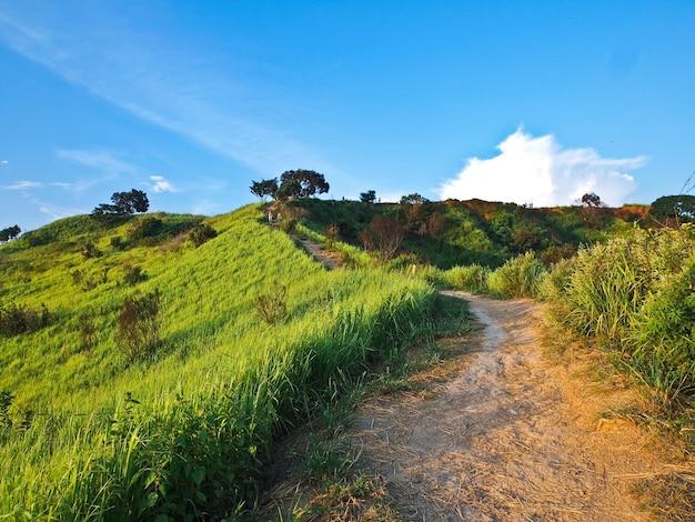 Szerokie pole ryżowe otoczone górami i niebieskim niebem