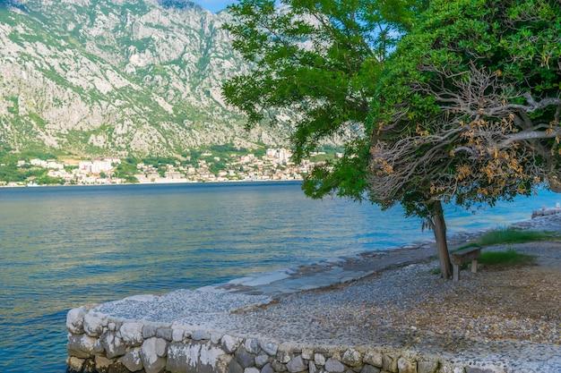 Szerokie samotne drzewo na brzegu błękitnego morza