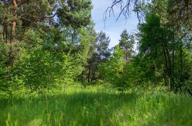 Szerokie trawniki i drzewa ozdobne oraz zielone lasy.