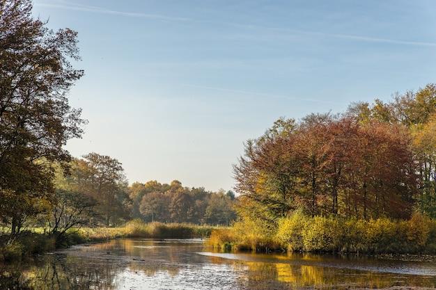Szerokie ujęcie czystego, błękitnego nieba i pięknego parku wypełnionego drzewami i trawą w jasny dzień