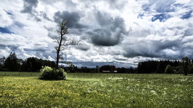 Szerokie ujęcie drzew i pola trawy pod pochmurnym niebem