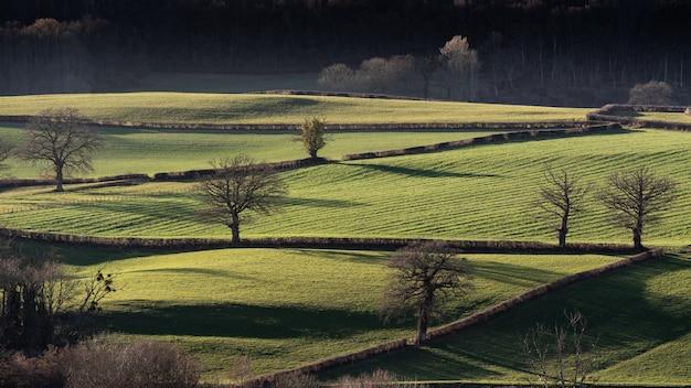 Szerokie ujęcie trawiastych pól z bezlistnymi drzewami w ciągu dnia