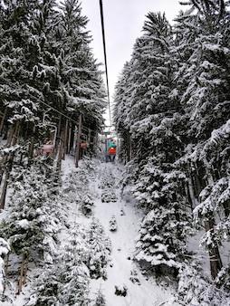 Szerokie ujęcie wyciągów narciarskich otoczonych sosnami