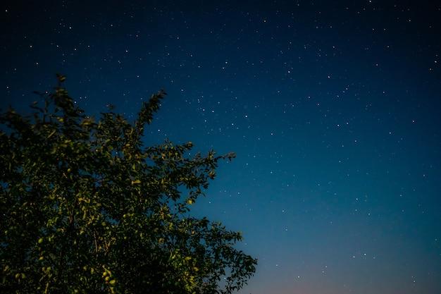 Szerokie zielone drzewo na tle głębokiego nocnego nieba i błyszczących gwiazd