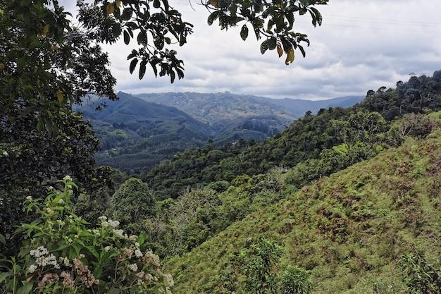 Szerokokątne ujęcie drzew i lasów na górze w ciągu dnia