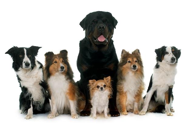 Sześć pięknych psów