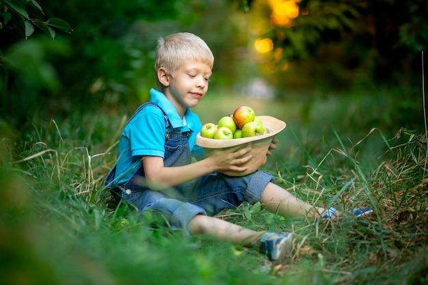 Sześcioletni chłopiec siedzi na trawie w sadzie jabłkowym i trzyma w rękach kapelusz z jabłkami