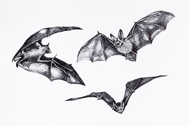 Szkic kolekcji nietoperzy. rysunek latający nietoperz, nietoperz wisi do góry nogami na białym tle.