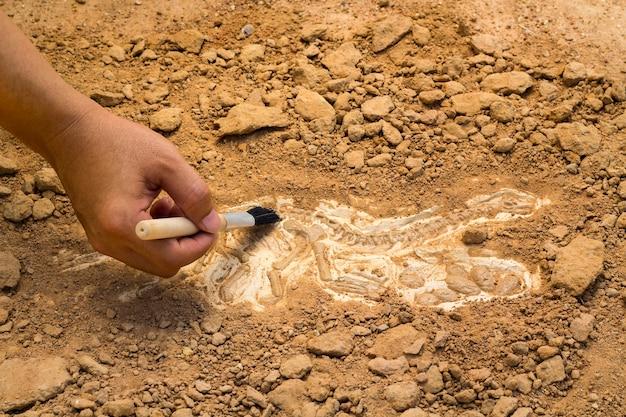 Szkielet i narzędzia archeologiczne