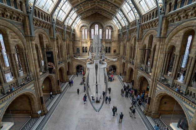 Szkielet płetwal błękitny w głównej sali muzeum historii naturalnej w londynie.