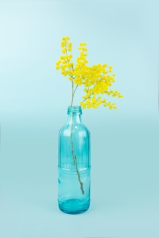 Szklana butelka z żółtymi mimozy. na białym tle na niebieskiej powierzchni
