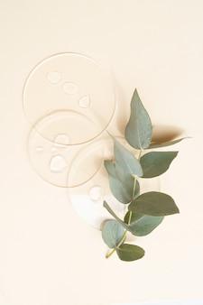 Szklana szalka petriego z przezroczystym czystym serum i zielonym eukaliptusem do pielęgnacji skóry na beżowym tle, widok z góry. koncept testy laboratoryjne i badania, wytwarzanie i testowanie kosmetyków