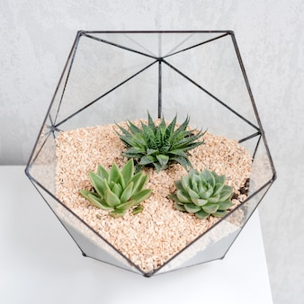 Szklana waza florarium z sukulentami i małym kaktusem na bielu stole.