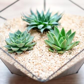 Szklana waza florarium z sukulentami i małym kaktusem na drewnie