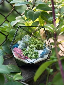 Szklane florarium z soczystymi roślinami w środku wśród zielonych liści