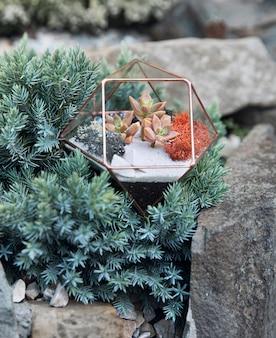 Szklane florarium z soczystymi roślinami w środku wśród zielonych roślin w szarym kamieniu