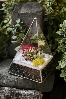 Szklane florarium z soczystymi roślinami w środku