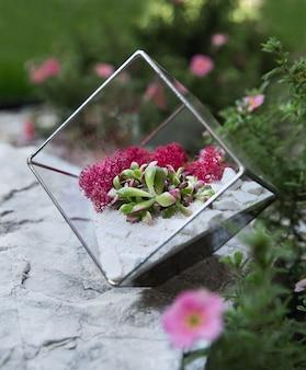 Szklane florarium z soczystymi roślinami wewnątrz na białym kamieniu w ogrodzie