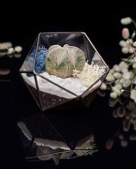Szklane florarium z soczystymi roślinami wewnątrz odizolowane na czarnym akrylu. sukulenty w szklanym pudełku.