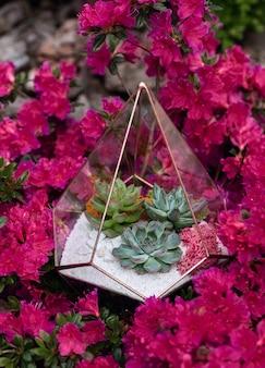 Szklane florarium z sukulentami w środku wśród fioletowego kwitnącego krzewu