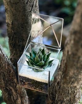 Szklane florarium z zieloną soczystą rośliną w środku
