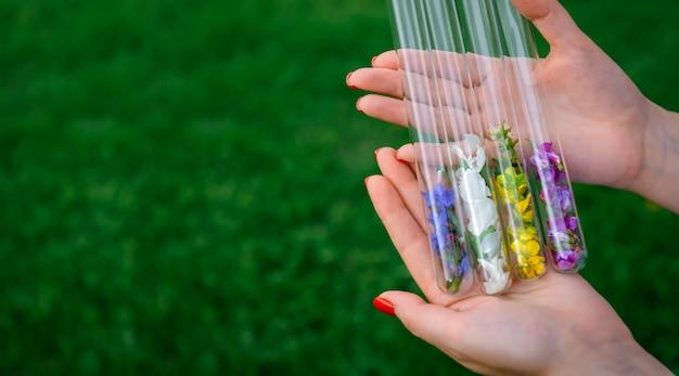 Szklane probówki z wielokolorowymi płatkami kwiatów w rękach kobiet, do perfum, do zbierania roślin