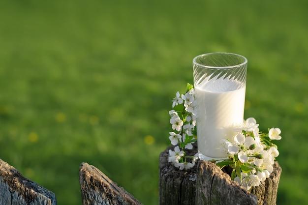 Szklanka świeżego mleka krowiego siedzi na starym płocie obok gałęzi wiśni