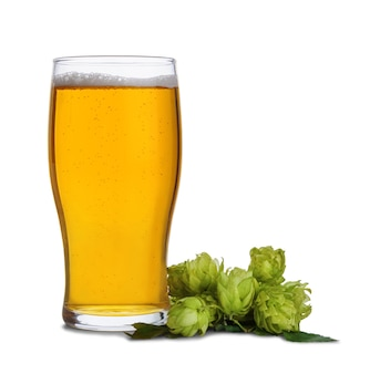 Szklany kubek piwa i szyszek chmielowych na białym tle