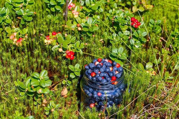Szklany słoik ze świeżo zebranymi jagodami i brusznicą stoi na leśnej polanie.