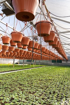 Szklarnia szklarniowa z sadzonką rośnie w szkółce roślinnej w rolnictwie i koncepcji rolnictwa farm