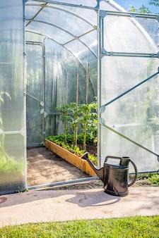 Szklarnia w ogrodzie z otwartymi drzwiami i drabiną