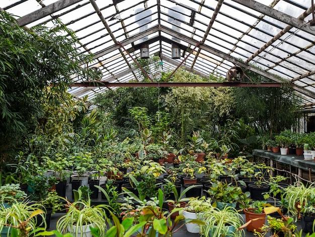 Szklarnia z dużą ilością kolorów i roślin. szklarnia z roślinami doniczkowymi