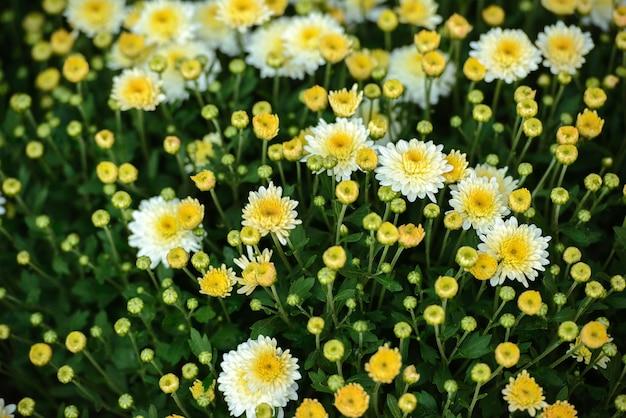 Szklarnia z kolorowymi kwitnącymi kwiatami.