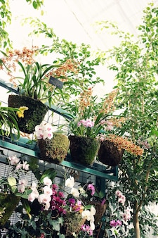Szklarnia z różnorodnymi roślinami