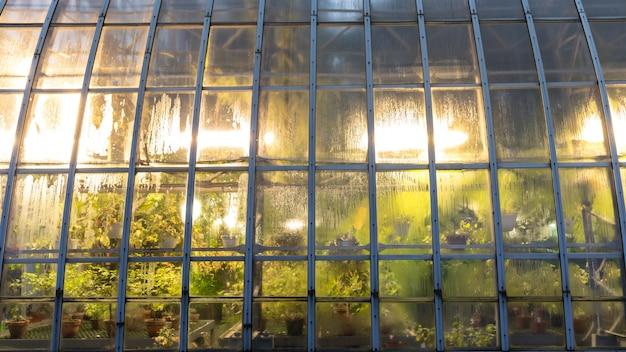 Szklarnia ze sztucznym oświetleniem roślin