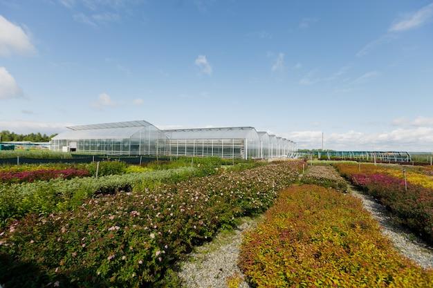 Szklarnie lub szklarnie do uprawy warzyw w letni dzień.